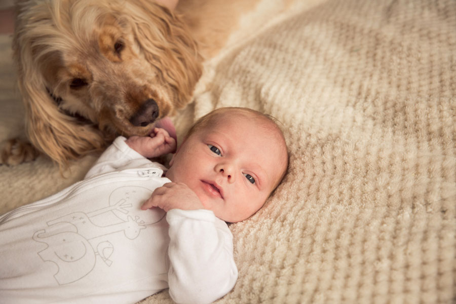 newborn-pregnancy-baby-beaumaris-photographer-77