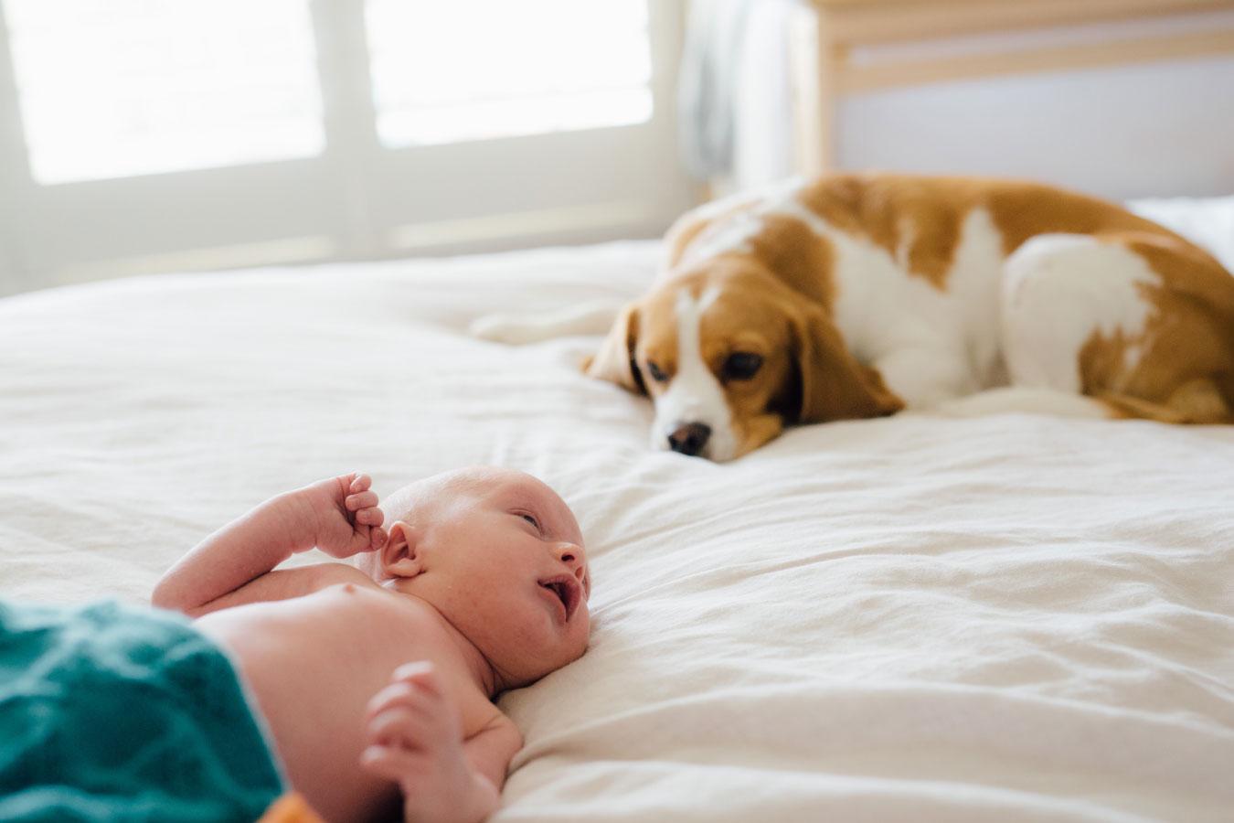 baby-photography-bayside-melbourne-beaumaris-newborn-home